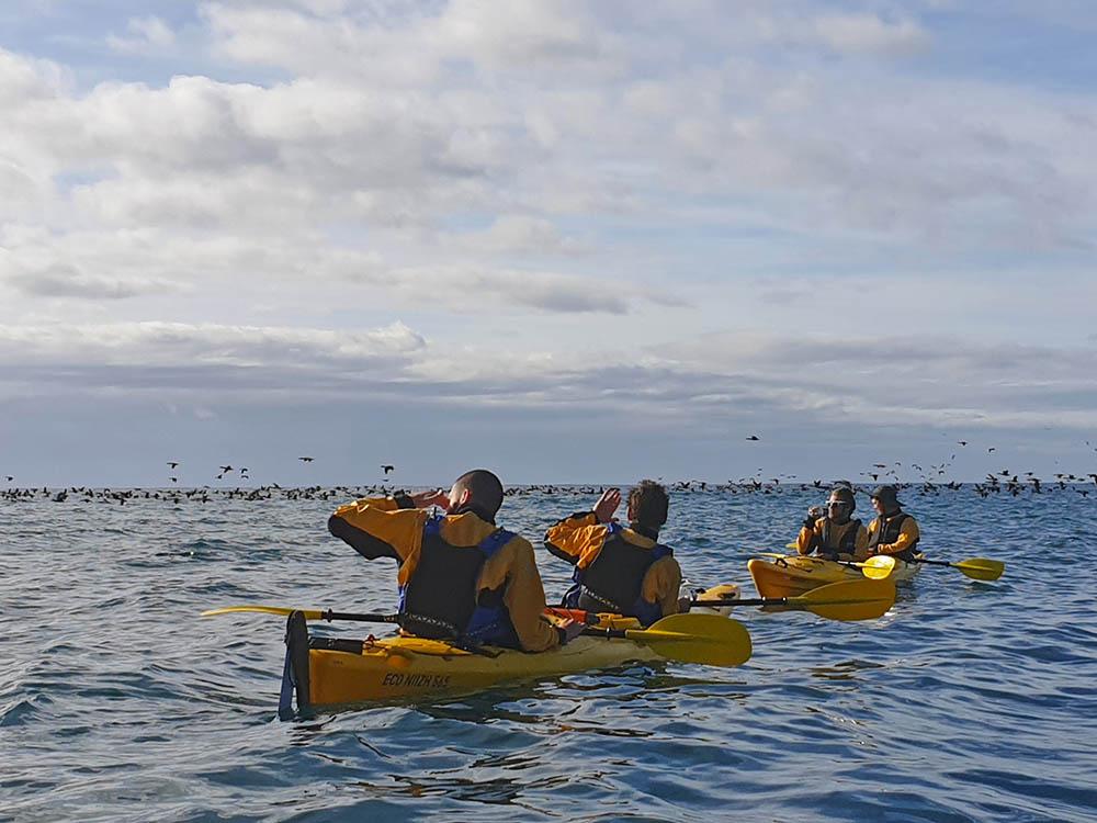 Flock of sea birds New Zealand
