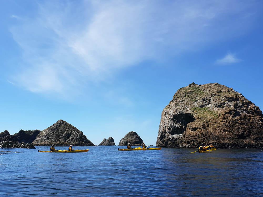 Sea Kayaking and wildlife